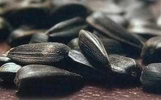 Тыквенные семечки при ГВ: можно ли есть кормящей маме