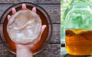 Как влияет чайный гриб на давление: понижает или повышает, как пить при высоком, низком АД