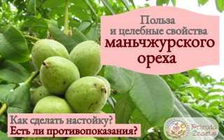 Настойка маньчжурского ореха на водке: применение, лечебные свойства, отзывы