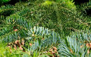 Хвойные деревья (хвойники): фото и названия, описание, виды, список