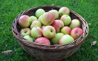 Как сделать домашнее вино из яблок: простой рецепт