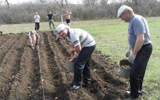 Благоприятные дни посадки картофеля в мае 2020 года