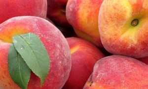 Персики: польза и вред для здоровья: калорийность, состав, гликемический индекс, лечебные свойства, слабит или крепит