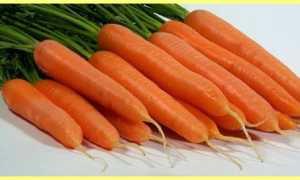 Морковь: описание и фото